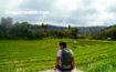 Taking In The Scenery Of The Verdant Rice Paddies In Boljoon