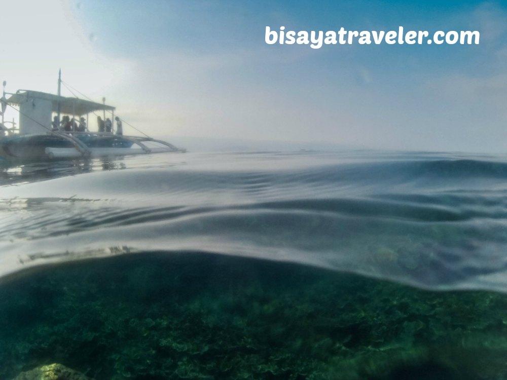 Pescador Island and Sardines Run: Cebu's Underwater Spectacles