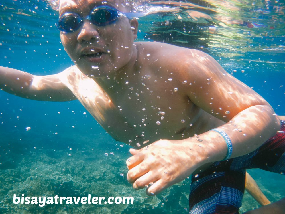 Pescador Island and Sardines Run: Cebu's Underwater Spectacles