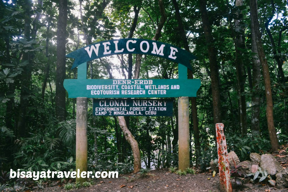 Campo 7 Man-Made Forest: A Mysterious Eye-opening Experience In Cebu
