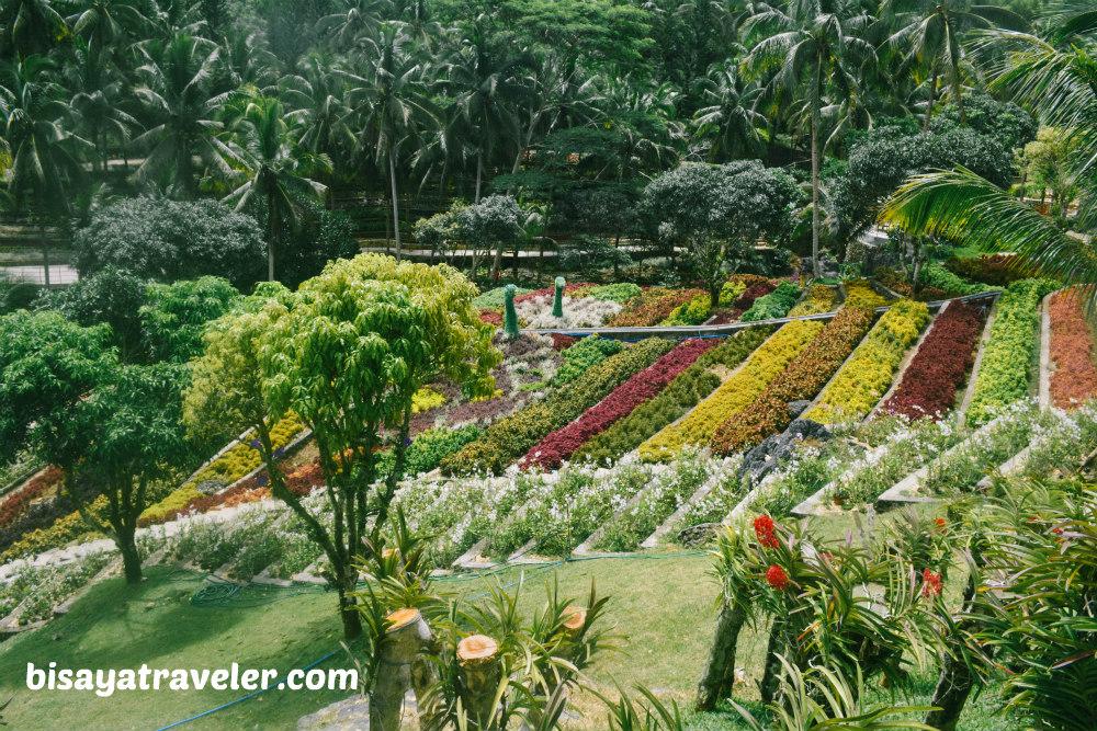 Cebu Safari And Adventure Park: An Irresistible Up-And-Coming Wildlife Haven