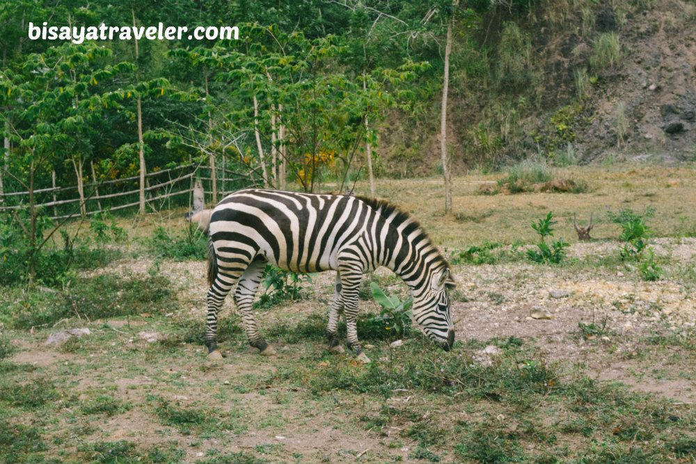 Cebu Safari And Adventure Park: An Irresistible Up-And-Coming Wildlife Haven