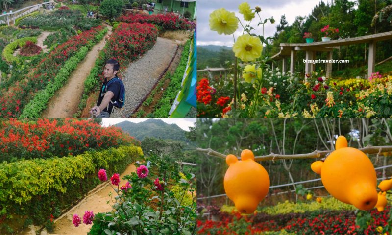Buwakan Ni Alejandra: Balamban's Surprisingly Wonderful Garden