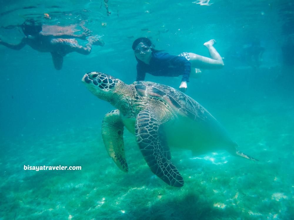 Turtle Point, Moalboal, Cebu